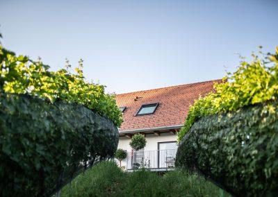 Weingarten vor der Winzarei